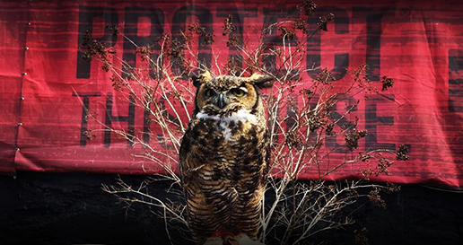 Protect This House and Owl Other Events Banner Image